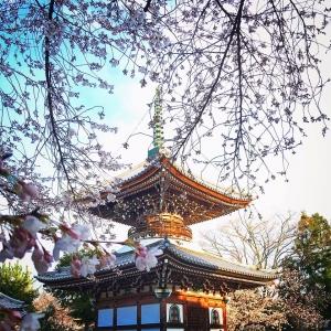 Honpouji-sakurako-2019