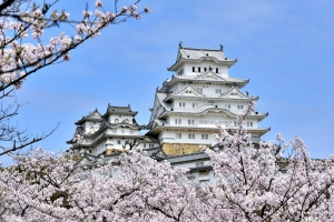 Himeji-cherry-blossom